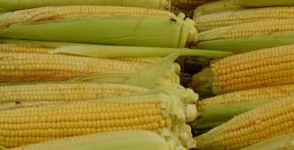 corn-65282_1920
