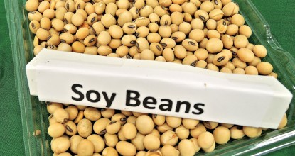 soy-beans-968986_1920