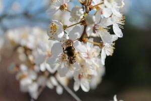 Органічний захист рослин