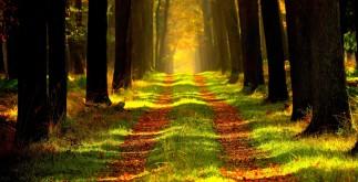 лісових насаджень