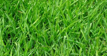 лікування газону