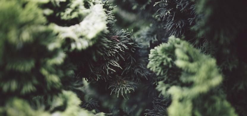 контроль якості рослин