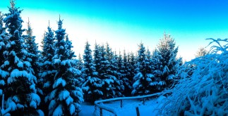 winter-941242_1920